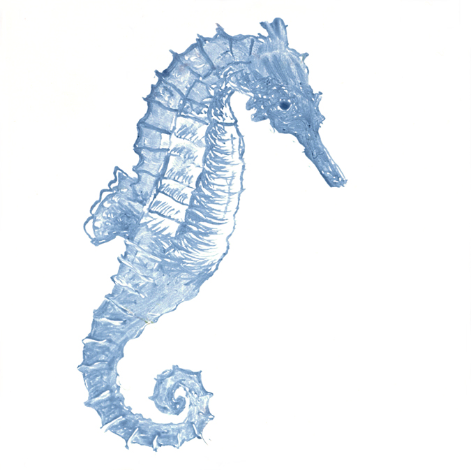 hand painted tile,sea horse,cape cod,susan davies,kitchen,bath
